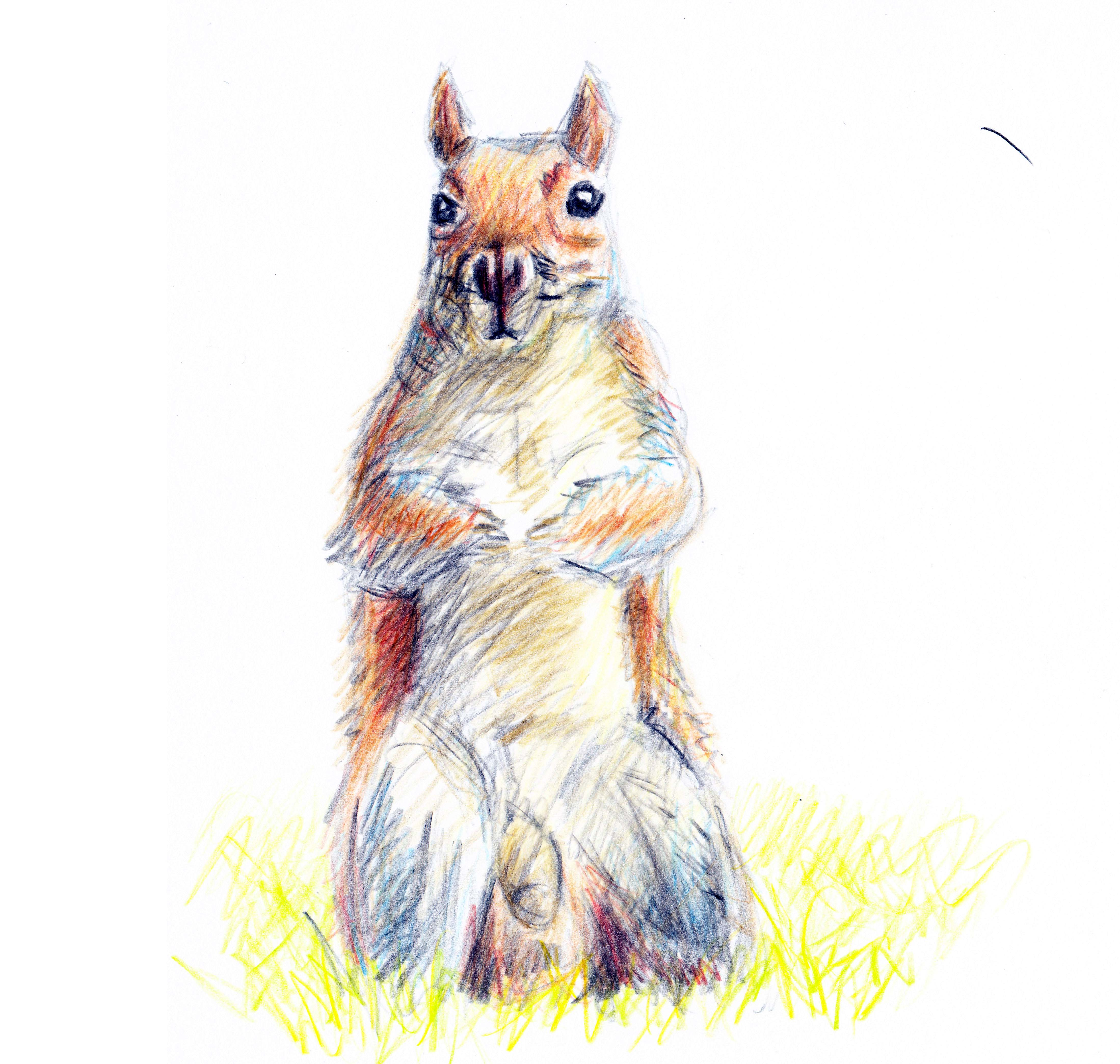 furry squirrel penis